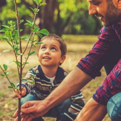 enviroment-why-we-plant-trees-800x545px.jpg